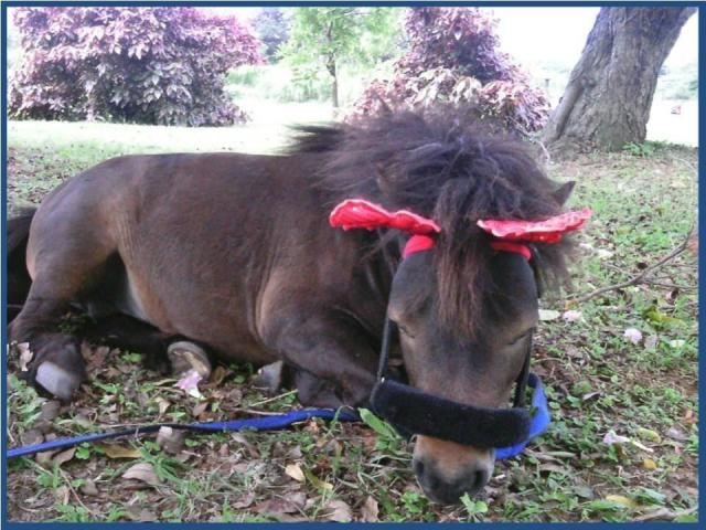 party ponies for all events...we come to you